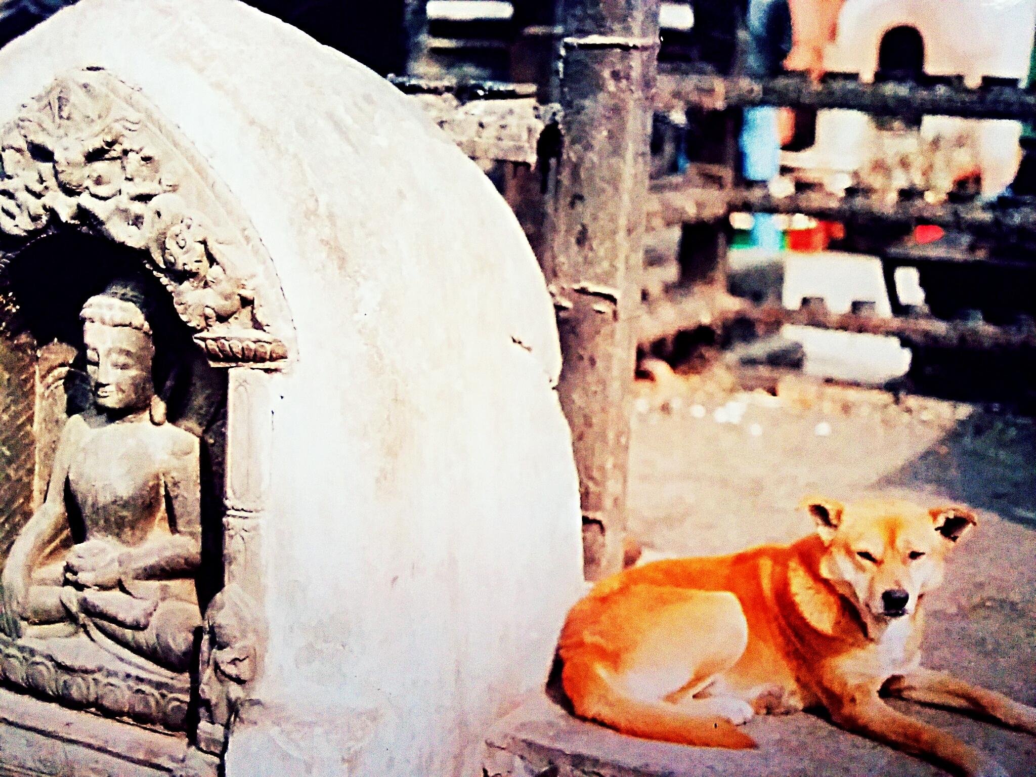 『ネパールで犬に噛まれた!~その時何が?』絶対死ぬ狂犬病の症状とは?