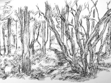 実際に木のスケッチしたからこそ分かる木の描き方や表現方法とは?