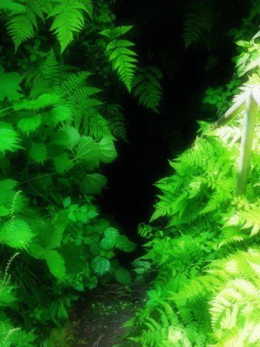 五泉市の穴場スポット大沢鍾乳洞を探検してきた!周辺の滝も大公開